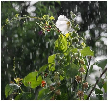 endlich_Regen